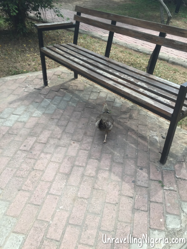 Chased it till it ducked under the bench.