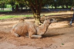 Another Nigerian 'Zoo'   University of Ilorin Zoo